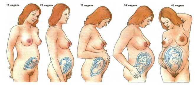 увеличение груди на 15 день цикла