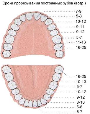 фото рост зубов у детей фото